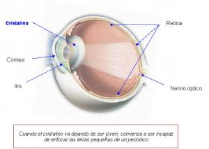 Lens and parts of the eye