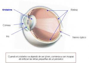 Cristalino y partes del ojo